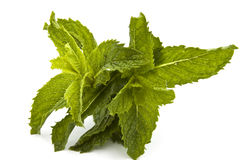 Mint. Fresh herb mint isolated on white royalty free stock photography