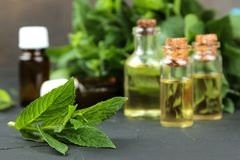 Mint aroma oils and leaves and branches of fresh green wild mint on a black concrete table. close-up stock photo