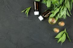 Mint aroma oils and leaves and branches of fresh green wild mint on a black concrete table. Top view. free place stock photo