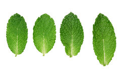 Mint as folhas Imagem de Stock Royalty Free