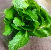 Mint as folhas Foto de Stock