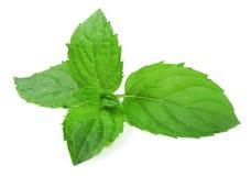 Mint as folhas Imagens de Stock