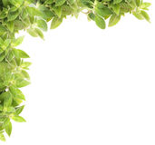 Mint Background Stock Photography