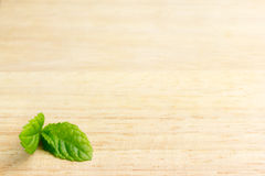 Mint background Royalty Free Stock Images