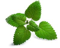 Mint balm Melissa officinalis, paths Royalty Free Stock Photo