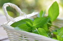Mint in basket Royalty Free Stock Photography