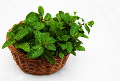 Mint in a basket Royalty Free Stock Photography