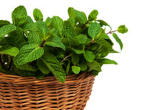 Mint in a basket. On a white  background Royalty Free Stock Images