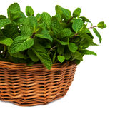 Mint in a basket Stock Photos