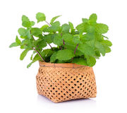 Mint in the basket Stock Photos