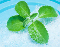 Mint on a blue background Stock Image