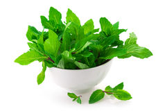 Mint in bowl Stock Image