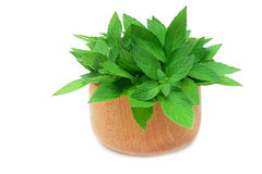 Mint in the bowl. Green fresh mint leaves in wood bowl Royalty Free Stock Image