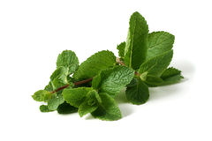 Mint branch on a white background Royalty Free Stock Photography
