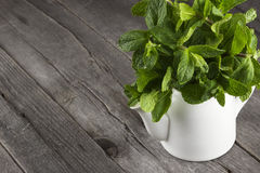 Mint branches in teapot on a dark wooden background Stock Image