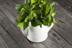 Mint branches in teapot on a dark wooden background Royalty Free Stock Photography