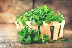 Mint. Bunch of fresh green organic mint leaf on wooden table closeup. Selective focus. Peppermint royalty free stock images