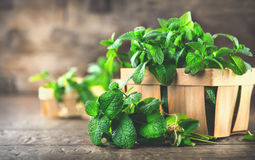 Mint. Bunch of fresh green organic mint leaf on wooden table. Closeup stock photography