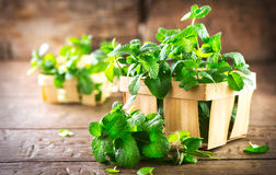 Mint. Bunch of fresh green organic mint leaf on wooden table Royalty Free Stock Images