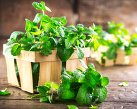 Mint. Bunch of fresh green organic mint leaf on wooden table Royalty Free Stock Photos