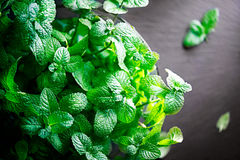 Mint. Bunch of fresh green organic mint leaves Stock Images
