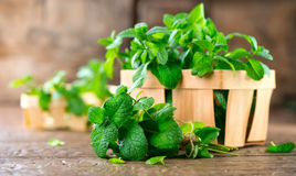 Mint. Bunch of fresh green organic mint leaves. On wooden table closeup royalty free stock image