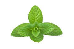 Mint bunch Royalty Free Stock Photography