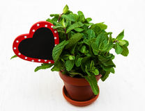 Mint in a clay pot. With a empty wooden label in hearts shape Royalty Free Stock Photo