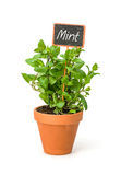 Mint in a clay pot with a label Stock Image
