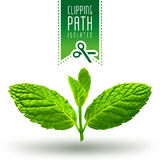 Mint  with clipping path Stock Photo