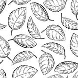 Mint  drawing seamless pattern.  mint plant and le Stock Photos