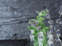 Mint and dry lavender Stock Photos