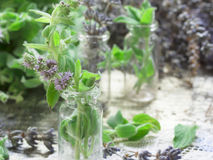 Mint and dry lavender Stock Images
