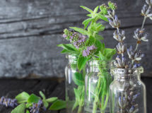 Mint and dry lavender Stock Photography