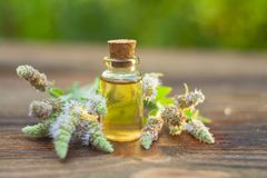 Mint essential oil in  beautiful bottle on table. Mint essential oil in a beautiful bottle on the table Stock Photos