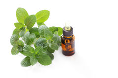 Mint essential oil Stock Images
