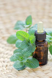 Mint essential oil Royalty Free Stock Image