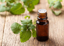 Mint essential oil Royalty Free Stock Photo