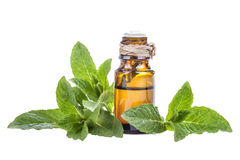 Mint essential oil. Essential oil made from mint on a white background Royalty Free Stock Photos