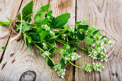Mint Flowers on Wooden Rustik Background Stock Photo