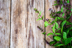 Mint Flowers on Wooden Rustik Background Royalty Free Stock Photo