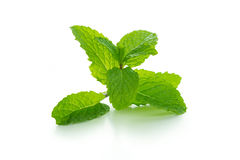 Mint Stock Image