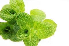 Mint. Fresh mint over white background Stock Photo