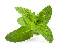 Mint. Fresh mint sprig isolated on white background royalty free stock photos