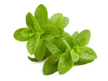 Mint. Fresh mint sprigs on white background stock photo