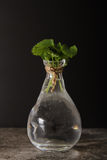 Mint in a glass vase with water. On a black background stone stock photos