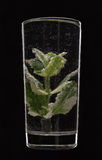 Mint in a glass of water Stock Photo