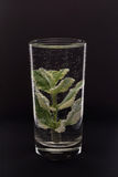 Mint in a glass of water Stock Photography