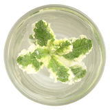 Mint in a glass with water view from above Stock Images