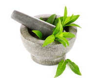 Mint in a gray mortar Stock Photography